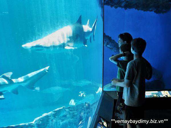 Thủy cung Bang Texas (Texas State Aquarium)