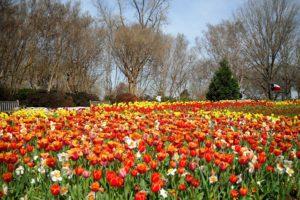 Khu-vuon-Dallas-Arboretum