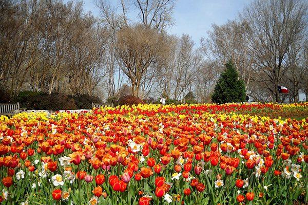 Khu vườn Dallas Arboretum
