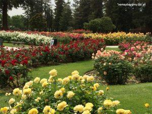 Vuon-hong-Municipal-Rose-Garden