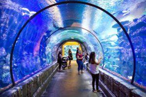 shark-reef-aquarium